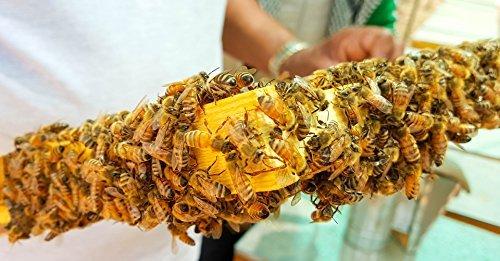 Honigwabe Wabenstück